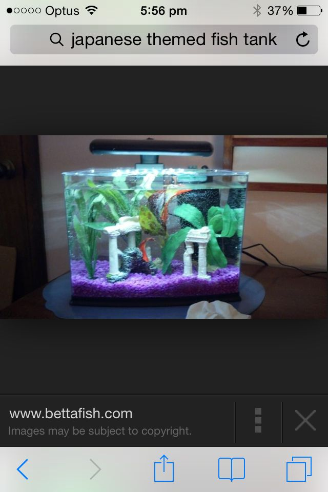 1000+ images about Fish tank inspiration on Pinterest Fish tanks ...