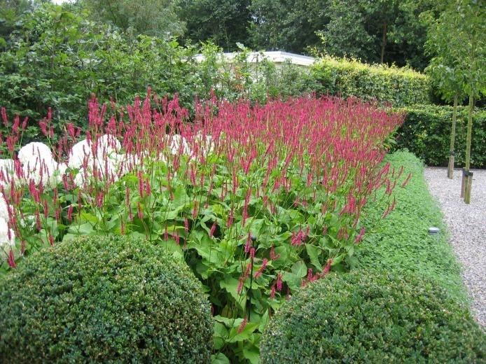 Rodenburg Tuinen | Planting theme