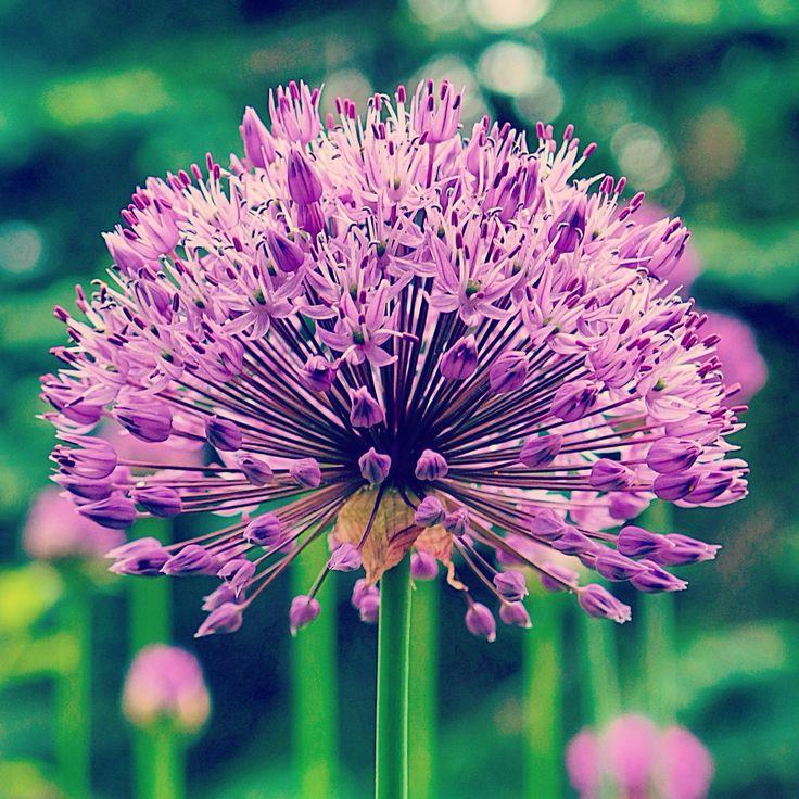 Flower kukka nature luonto kasvi