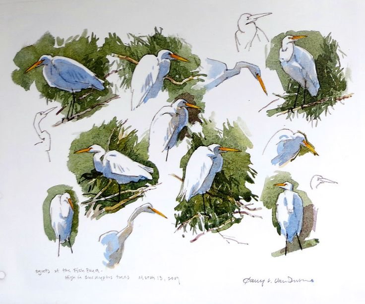 Egret sketches by Barry van Dusen, USA