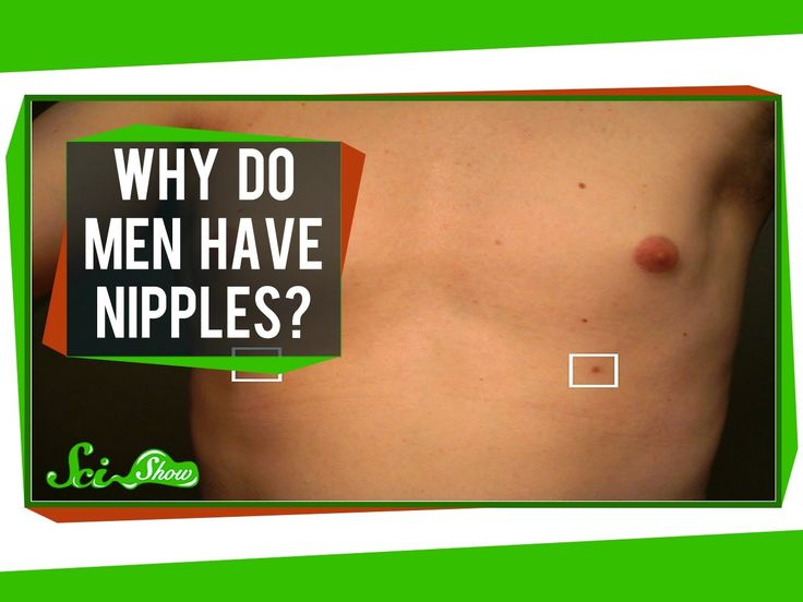 Why Do Men Have Nipples? Note this guy is really good.  He explains things that anyone could find out just by Googling.  Yet he is able to build a reputation as an authority simply by using his personality. There nothing particularly special about the video production though! Just him explaining something...