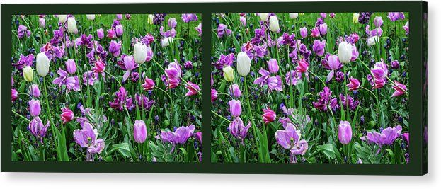 Jenny Rainbow Fine Art Photography Acrylic Print featuring the photograph Carpet Of Purple Tulips. Diptych   Acrylic print with spring bloom of purple tulips and vivid greens will bring to your home a revitalizing touch of awaking nature. Prints available in different sizes, order and payment online, delivery, 30 days money back guaranty