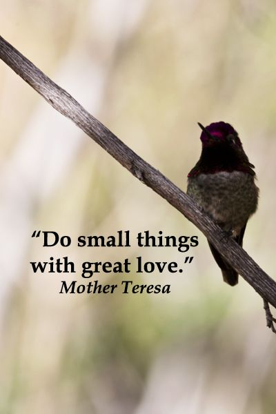 """Do small things with great love.""  Mother Teresa – On image of hummingbird in Arizona by F. McGinn -- View slideshow of social inspiration quotes at http://www.examiner.com/article/president-obama-establishes-national-service-task-force"