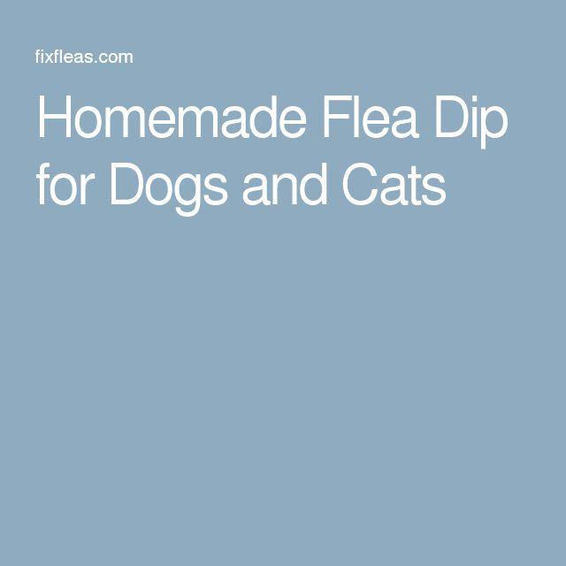 Homemade Flea Dip For Cats Homemade Ftempo
