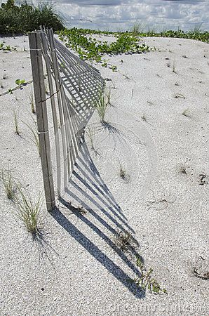 A section of sand dune fencing designed to help protect delicate new plants makes an unusual pattern in the afternoon light.