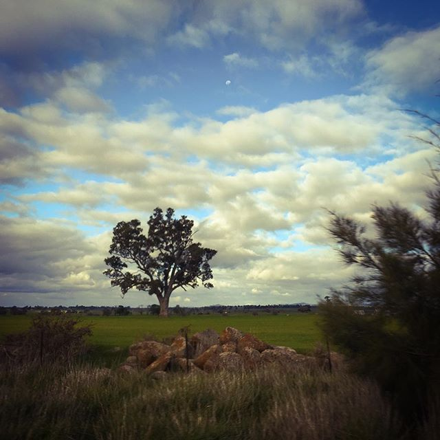 #Redesdale #photography #landscape #country #iphoneonly