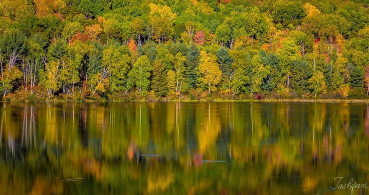 Fall Reflections - null