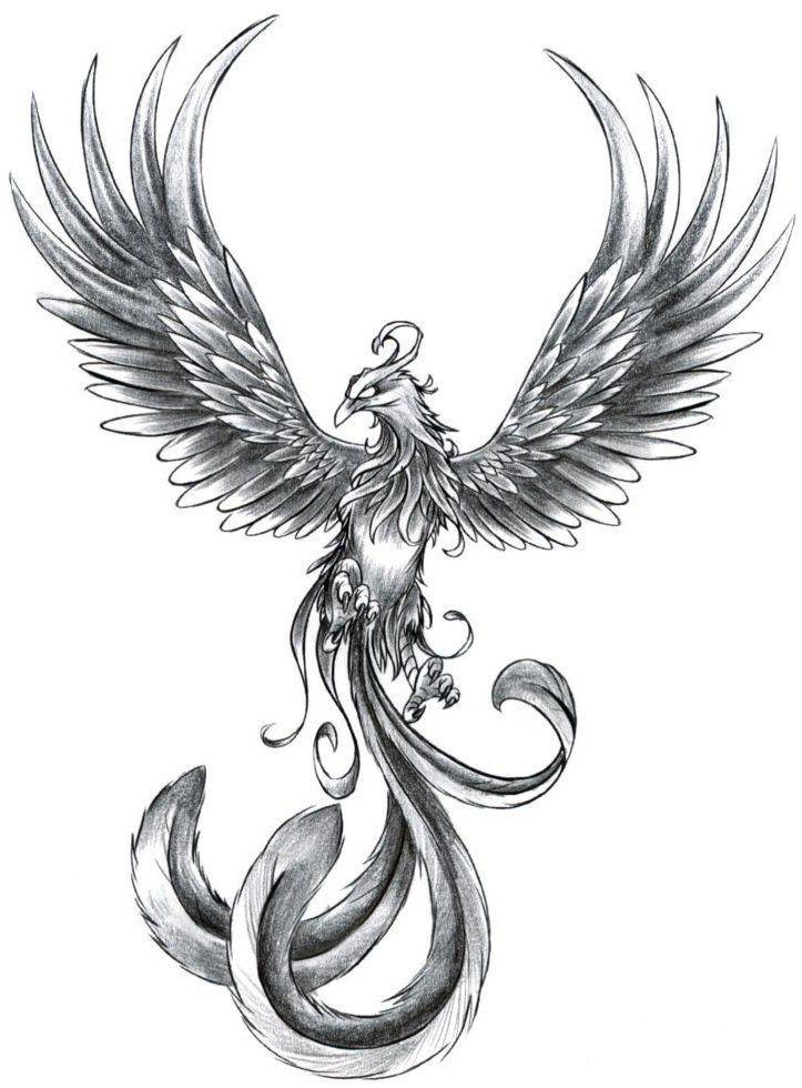 рисунки феникса для татуировок лишних