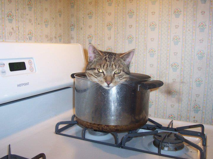 What's Cookin'