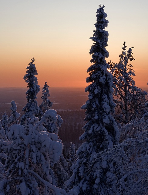 Christmas day 2009 in Iso-Syöte, Finland. The sun is pretty much as high as it gets this time of year...