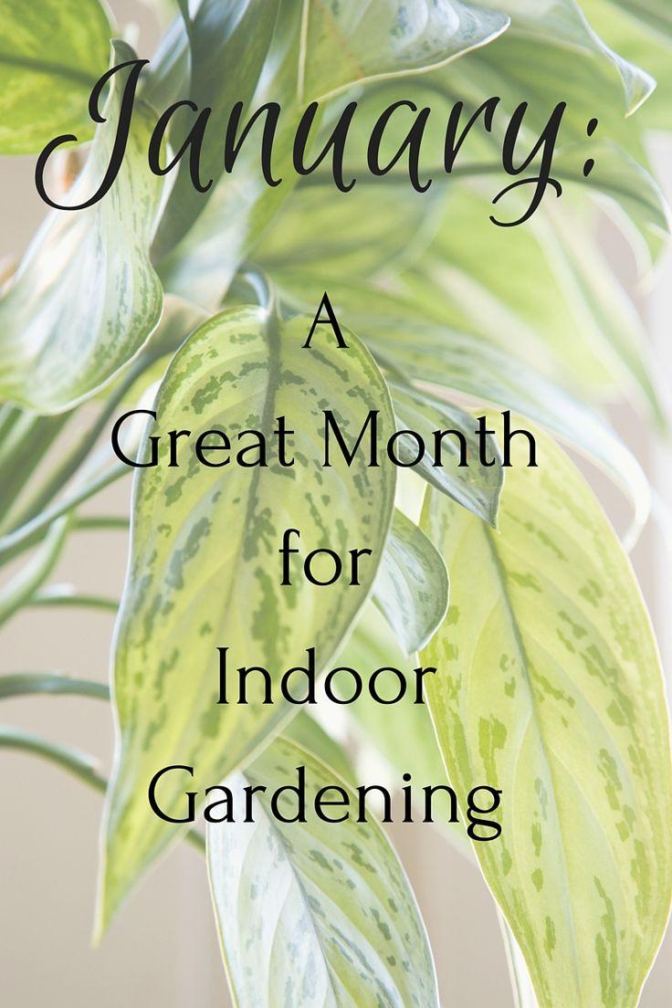93 best gardening outdoor plants images on pinterest outdoor