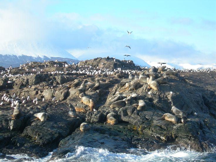 https://flic.kr/p/5mZDVt | Lo scoglio dei cormorani e leoni marini | Cormorani e Leoni Marini - Canale di Beagle - Ushuaia - Terra del Fuego - Argentina