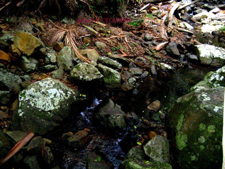 Creek walk ,nature photograp, nature prints ,photography prints, wall art by AwinoCreations on Etsy