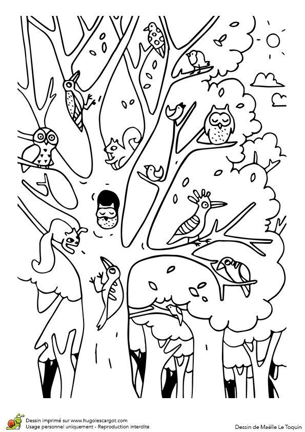 Coloriage du jeu du cache-cache des animaux, du monde dans la forêt, page 12 sur 12 sur HugoLescargot.com