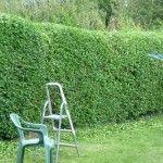 Planting Noise Blockers: Best Plants For Noise Reduction In Landscapes