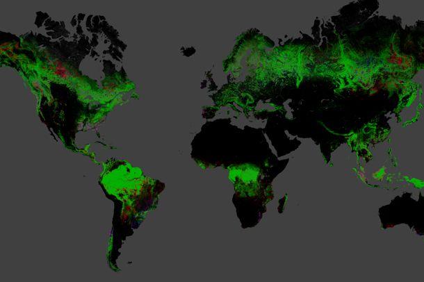 Interaktiivinen metsäkartta.