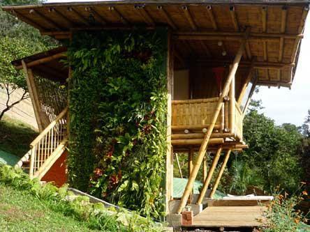 casa hecha con bambu con un bellisimo jardin vertical