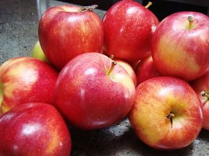Apple Varieties Grown in Washington State: Honeycrisp