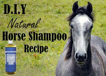 DIY Natural Horse Shampoo Recipe I think i may have found my new favorite blog!