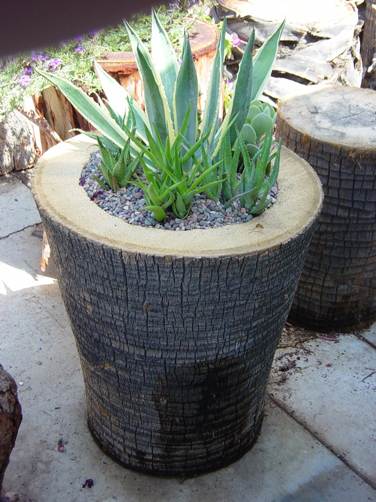 10 Best Images About Palm Tree Stumps Repurposed On