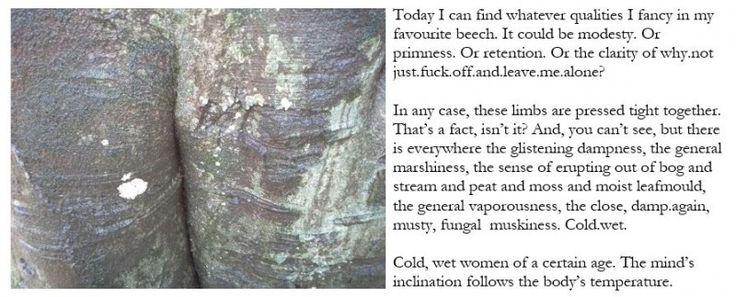 cold wet beech