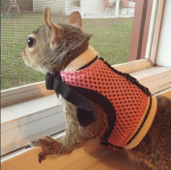 Rescue of the Day: Jill the Squirrel Escaped a Hurricane and Found a Happy Home - Cheezburger