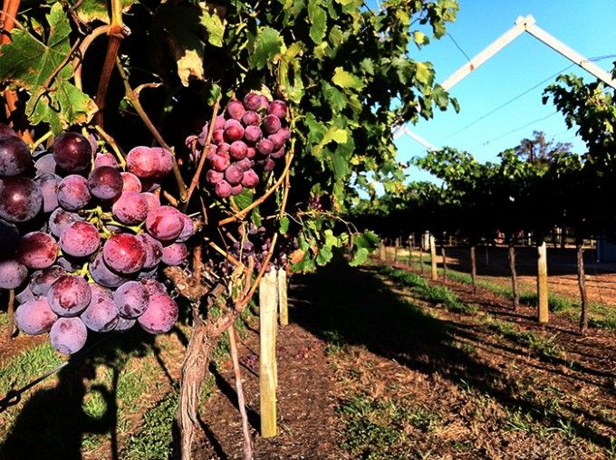 Cycling Tour of Swan Valley Wineries