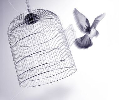 Freedom: Tattoo Ideas, Maya Angelou, The Doors, Birds Cages, Be Free, Birdcages, New Tattoo, First Places, Blog