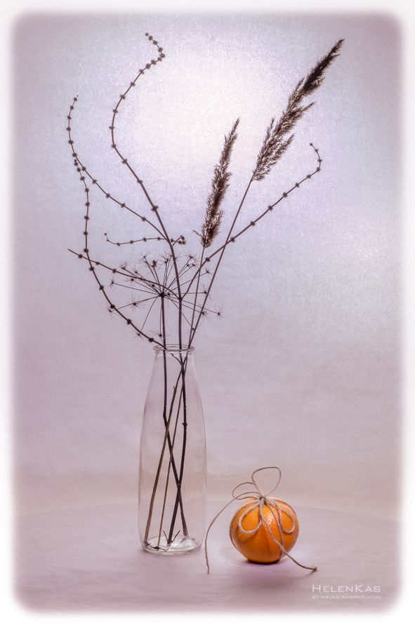 зимний этюд 2 натюрморт сухоцветы силуэты апельсин