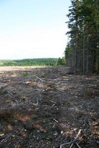 Atividade de sala de aula sobre o desmatamento da floresta tropical