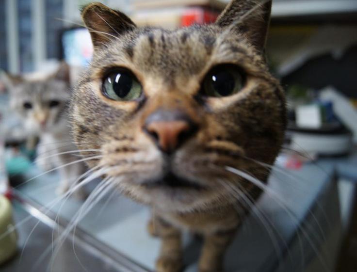 カメラが気になるニャ/猫 ネコ cats  (Nestle PURINA ネスレ日本)
