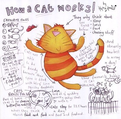 How A Cat Works