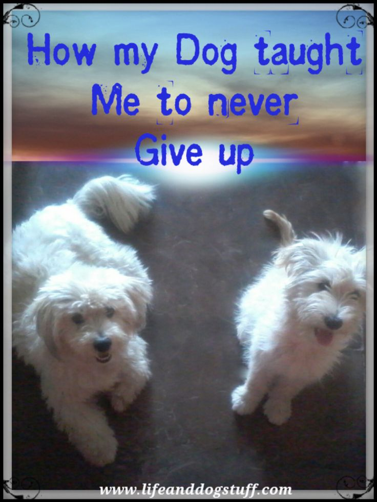 How My Dog Taught Me To Never Give Up. #blogger #blog