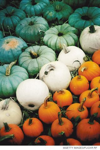 Scholastic life cycle of a pumpkin video