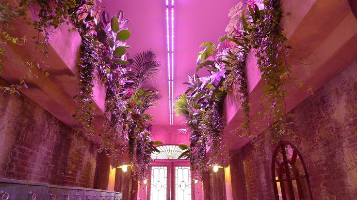 Claire Obscure. Hangende tuinen onder LED groeilampen in Club Claire Amsterdam. Amstelhoveniers heeft met veel plezier aan dit project gewerkt. | Matthias van den Berg | Pulse | LinkedIn