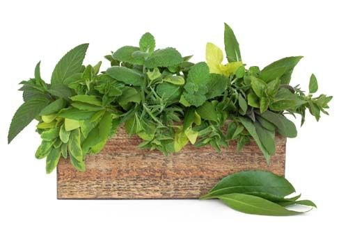 Konténeres fűszernövények