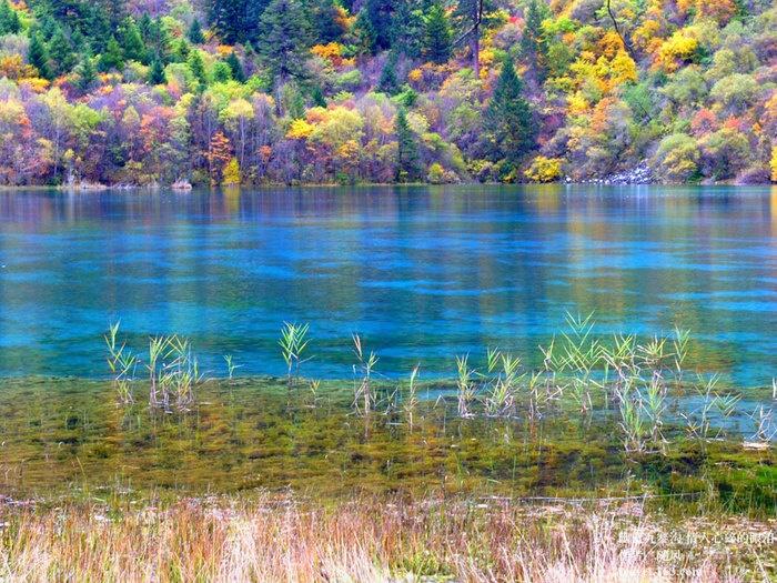 後ろの木のカラフルさと水面の薄い青と濃い青の配色が好きです。泳いでる魚も気になるし、何より見ていて飽きない景色。こういうところで釣りしてみたいものです。