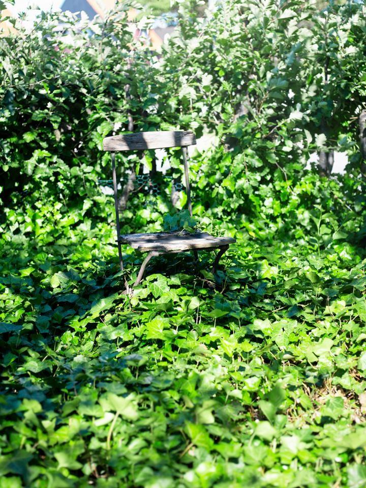 Vintergrönt. Under träd och i halvskuggiga delar av trädgården kan man istället plantera murgröna som snabbt täcker stora ytor. När du har grävt upp grässvålen och blandat ner några säckar med mullrik jord, passa på att gräva ner vårlökar. Snödroppar kan avlösas av kungsängsliljor som trivs halvfuktigt. Liljorna sprider sig till ett effektfullt hav. Låt liljekonvaljer blomma med höga alliumbollar. Övriga året är murgrönan vintergrön, behöver bara klippas till runt kanterna.