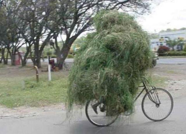 bike or tumbleweed