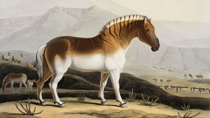 More than 100 years after the last quagga died, scientists in South Africa are using selective breeding to bring it back.