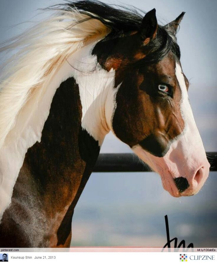 in love with this one. not a huge blue eyed horse fan (usually a little cray cray) but this one is really pretty
