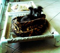 PVC dog cots - measurements for small dog cot - The DIY Girl