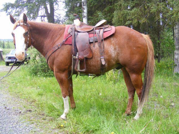 Aqha Barrel Racing Horses Sale