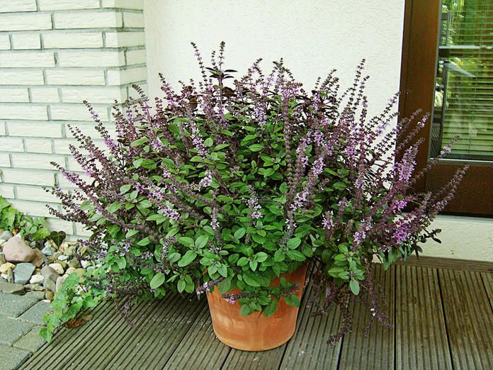 29 best outdoor plants to buy images on pinterest flowers garden plants and geranium sanguineum. Black Bedroom Furniture Sets. Home Design Ideas