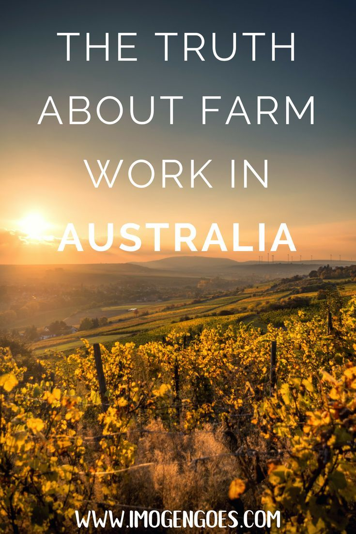 Do you need to complete your regional farm work in Australia to obtain a second year working holiday visa? Here is my honest and detailed account of exactly how I found a place in a working hostel to spend nearly four months working on a vineyard to fulfil the 88 days required by the Australian government. I've also included all the most important tips and tricks to help you avoid getting scammed by dodgy employers and investigated by the Australian government.