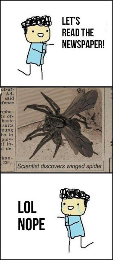 Funny Pictures - We are doomed this is a very scary hopefully very mean joke... I mean winged spiders... really?!