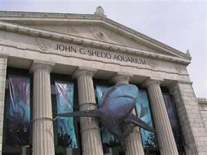17 Best Images About Shedd Aquarium On Pinterest Animals