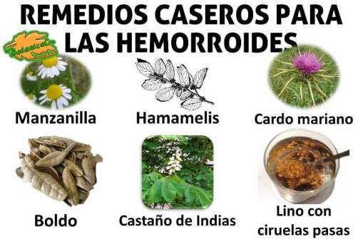 plantas medicinales y remedios caseros para las hemorroides o almorranas