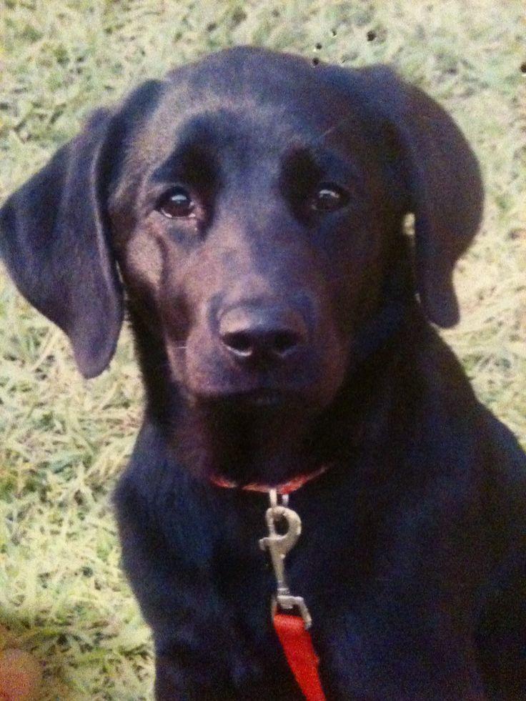 My sweet dog, Lulu