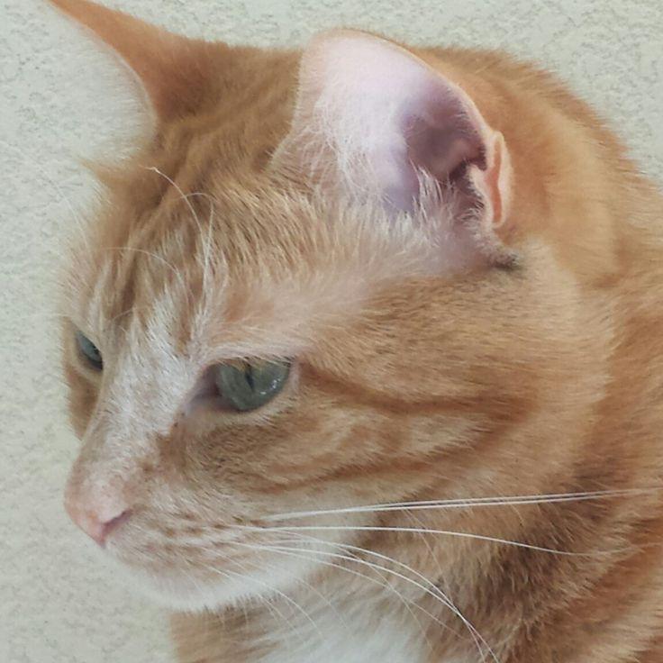 Canelle #closeup #cat